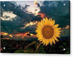 At Sunset Acrylic Print