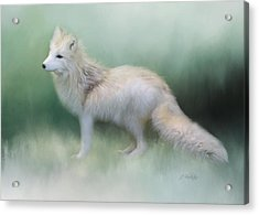 At The Centre - Arctic Fox Art Acrylic Print by Jordan Blackstone
