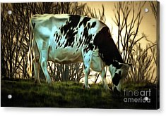 Acrylic Print featuring the painting At The End Of The Day - Black And White Cow by Janine Riley