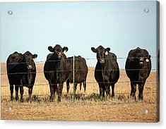 At The Fence Acrylic Print by Todd Klassy
