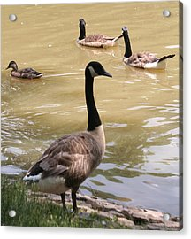 At The Park Acrylic Print by Gerald Mitchell
