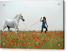 At The Poppies' Field... 2 Acrylic Print by Dubi Roman