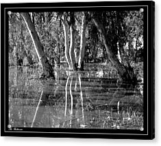 Acrylic Print featuring the photograph At The Swamp 2 by Arik Baltinester