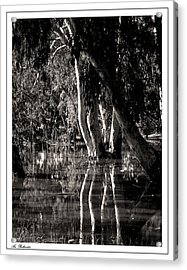 Acrylic Print featuring the photograph At The Swamp by Arik Baltinester