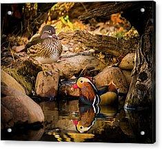 At The Waters Edge - Mandarin Ducks Acrylic Print