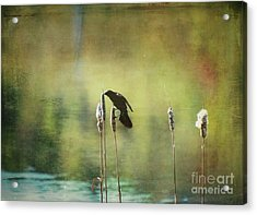 Acrylic Print featuring the photograph At This Moment by Aimelle