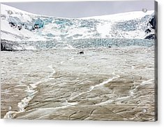 Acrylic Print featuring the photograph Athabasca Glacier With Guided Expedition by Pierre Leclerc Photography