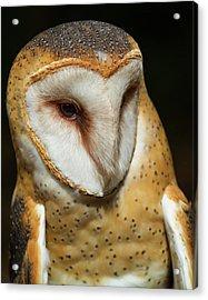 Athena The Barn Owl Acrylic Print by Arthur Dodd