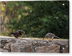 Attack Strategy Acrylic Print by Ramabhadran Thirupattur