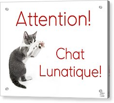 Acrylic Print featuring the photograph Attention Chat Lunatique by Endre Balogh