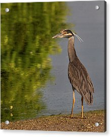 Acrylic Print featuring the photograph Attentive Heron by Jean Noren
