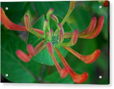 #atthestillcenter Acrylic Print by Becky Furgason