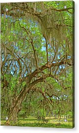 Attraction Acrylic Print by Steven Dillon