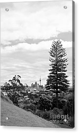 Auckland City New Zealand Acrylic Print