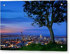 Auckland Acrylic Print