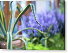 Acrylic Print featuring the photograph Audrey IIi by Brian Hale