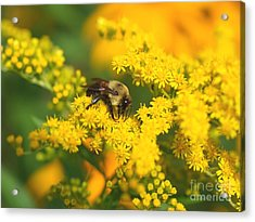 Acrylic Print featuring the photograph August Bee by Susan  Dimitrakopoulos