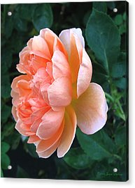 Acrylic Print featuring the photograph August Rose 09 by Joyce Dickens