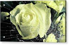 Aunt Edna's Rose Acrylic Print