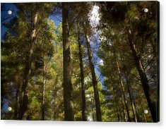 Aupouri Forest Acrylic Print by Graham Hughes