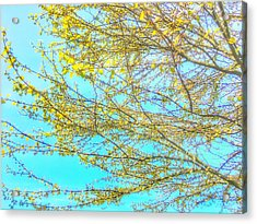 Acrylic Print featuring the photograph  Aura Of Springtime by Connie Handscomb