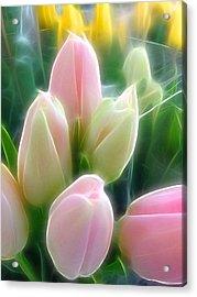 Aura Of Tulip Acrylic Print