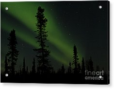 Aurora Borealis The Northern Lights Interior Alaska Acrylic Print