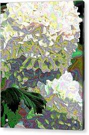 Aurora Two Acrylic Print