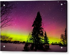 Aurora With Spruce Tree Acrylic Print