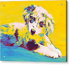 Aussie Puppy-yellow Acrylic Print by Jane Schnetlage
