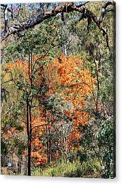 Australian Bush 2 Acrylic Print by Steven Ralser