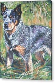 Australian Cattle Dog 1 Acrylic Print by Lee Ann Shepard