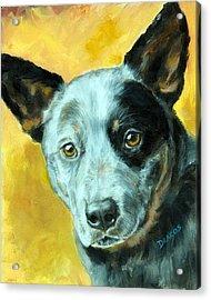 Australian Cattle Dog Blue Heeler On Gold Acrylic Print by Dottie Dracos