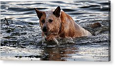 Out For A Swim Acrylic Print