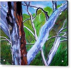 Australian Gum Trees Acrylic Print