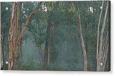 Australian Morning Acrylic Print
