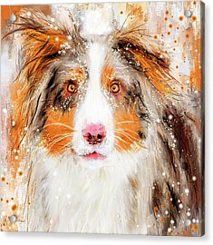 Australian Shepherd Paintings Acrylic Print