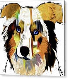Australian Shepherd X1 By Nixo Acrylic Print