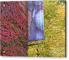Autum Colors Acrylic Print by Robyn Leakey