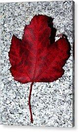 Autum Maple Leaf 1 Acrylic Print by Robert Morin