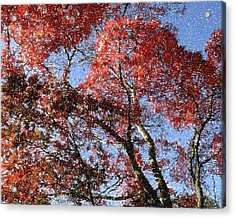 Autum Trees Illustrated Acrylic Print