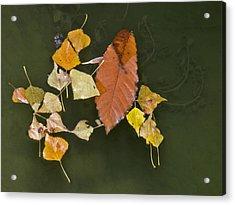 Autumn 1 Acrylic Print by Kenton Smith