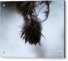 Acrylic Print featuring the photograph Autumn 2 by Wilhelm Hufnagl