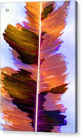 Autumn Abstract Acrylic Print by Carolyn Stagger Cokley
