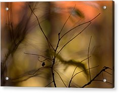 Autumn Abstract Acrylic Print