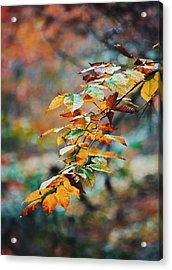 Acrylic Print featuring the photograph Autumn Aesthetics by Parker Cunningham