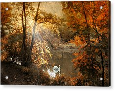 Acrylic Print featuring the photograph Autumn Afterglow by Jessica Jenney