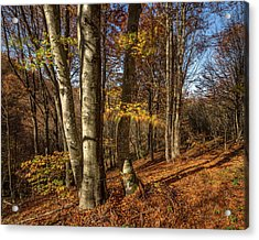 Acrylic Print featuring the photograph Autumn Afternoon In Forest by Davorin Mance