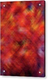 Autumn Ash Tree 4 Acrylic Print by Steve Ohlsen