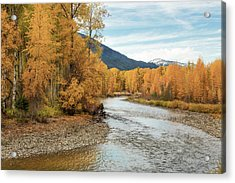Autumn Aspen By The River Acrylic Print by Mary Jo Allen